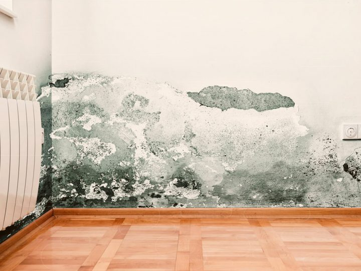 Umidade e o mofo das paredes